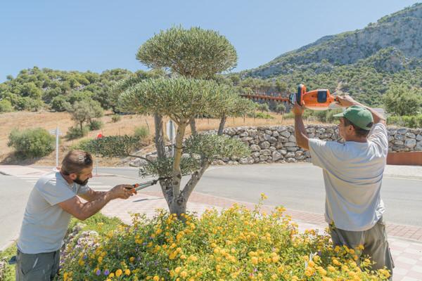 jardineros emplazamiento